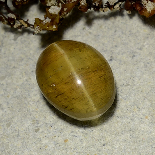 Yellowish Brown Cat's Eye Apatite Gem - 2.5ct Oval Cabochon (ID: 486179)