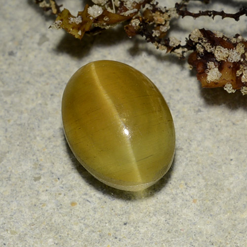 Greenish Golden Cat's Eye Apatite Gem - 2.7ct Oval Cabochon (ID: 486181)