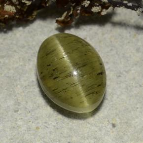 Green Cat's Eye Apatite Gem - 2.7ct Oval Cabochon (ID: 486183)