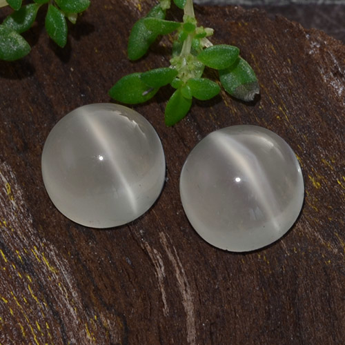 Warm White Cat's Eye Moonstone Gem - 1.3ct Round Cabochon (ID: 481543)