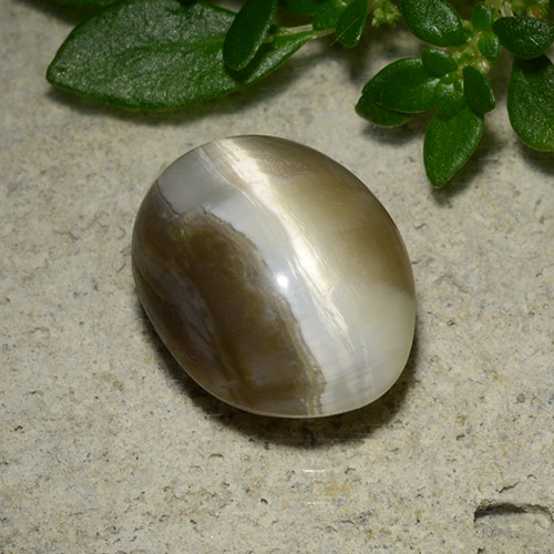 Brown Cat's Eye Opal Gem - 2.8ct Oval Cabochon (ID: 493513)