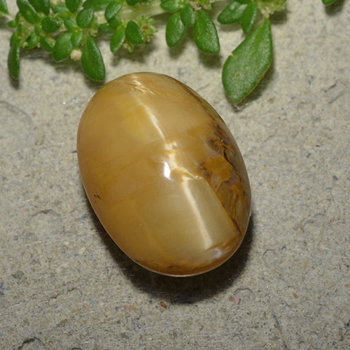 Yellow Orange Cat's Eye Opal Gem - 6.3ct Oval Cabochon (ID: 494015)