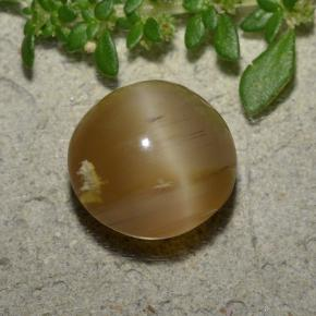 Light Caramel Brown Cat's Eye Opal Gem - 4.6ct Round Cabochon (ID: 494017)