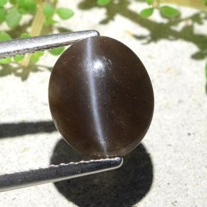 Brown Cat's Eye Scapolite Gem - 3.5ct Oval Cabochon (ID: 484121)
