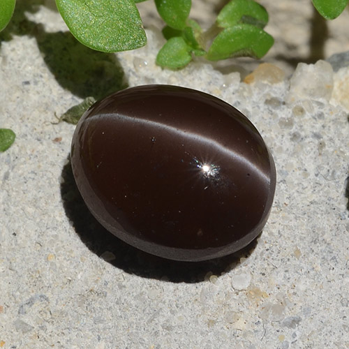 Brown Cat's Eye Scapolite Gem - 3.1ct Oval Cabochon (ID: 484370)
