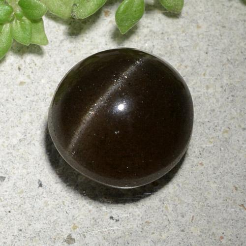 3.3ct Round Cabochon Black Cat's Eye Scapolite Gem (ID: 484896)