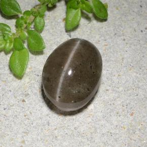 Medium Brown Cat's Eye Scapolite Gem - 2.6ct Oval Cabochon (ID: 485040)