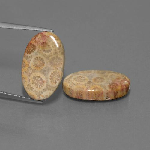 Multicolor Fossil Coral Gem - 9.6ct Oval Cabochon (ID: 450084)