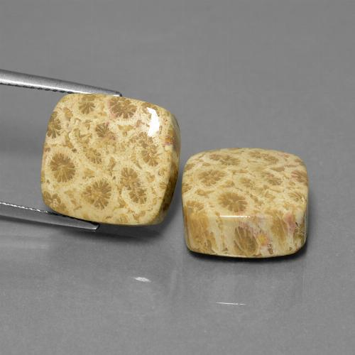 Multicolor Fossil Coral Gem - 13ct Cushion Cabochon (ID: 450150)