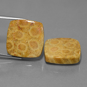 Multicolor Fossil Coral Gem - 20.2ct Cushion Cabochon (ID: 450155)