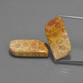 thumb image of 8.7ct Fancy Cabochon Multicolor Fossil Coral (ID: 454623)
