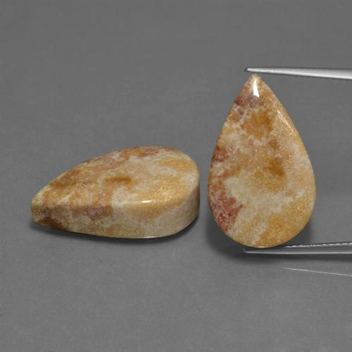 Multicolor Fossil Coral Gem - 16.7ct Pear Cabochon (ID: 455046)