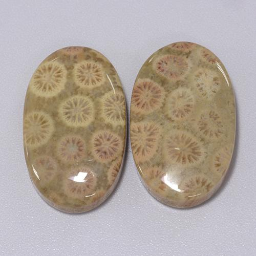 Multicolor Fossil Coral Gem - 12.3ct Oval Cabochon (ID: 455053)