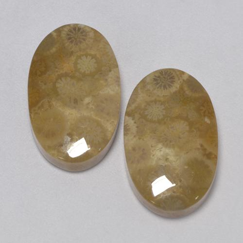 Multicolor Fossil Coral Gem - 12.3ct Oval Cabochon (ID: 455517)