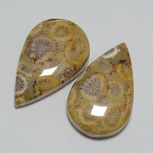 14.8ct Pear Cabochon Multicolor Fossil Coral Gem (ID: 455520)