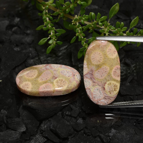 Multicolor Fossil Coral Gem - 11.8ct Oval Cabochon (ID: 472146)