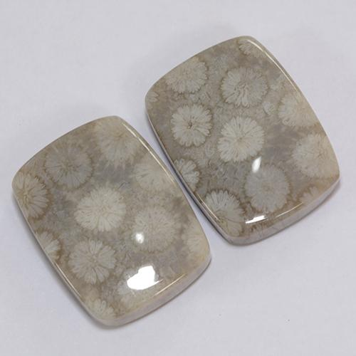 Multicolor Fossil Coral Gem - 20.1ct Cushion Cabochon (ID: 473964)