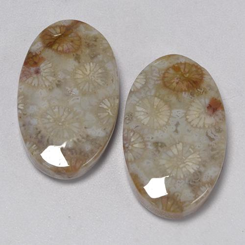 Multicolor Fossil Coral Gem - 11.5ct Oval Cabochon (ID: 474616)