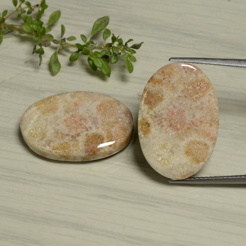 Multicolor Fossil Coral Gem - 15ct Oval Cabochon (ID: 475188)