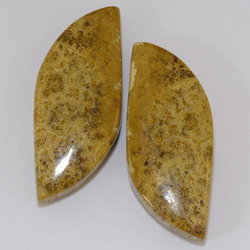 Multicolor Fossil Coral Gem - 11.8ct Fancy Cabochon (ID: 510925)