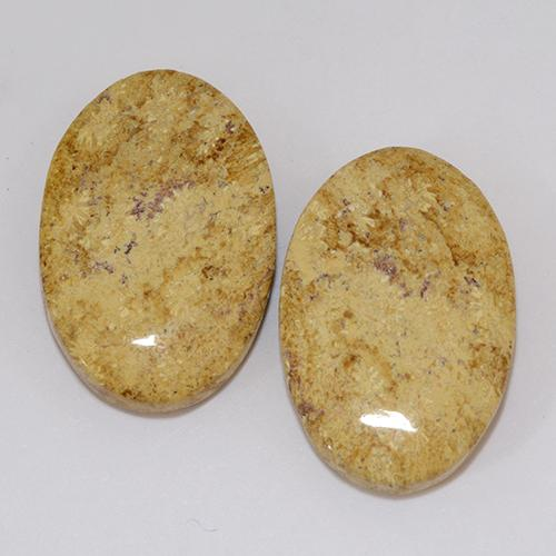 Multicolor Fossil Coral Gem - 9.6ct Oval Cabochon (ID: 510926)