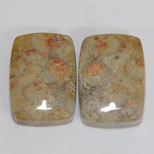 Multicolor Fossil Coral Gem - 23.4ct Cushion Cabochon (ID: 510928)