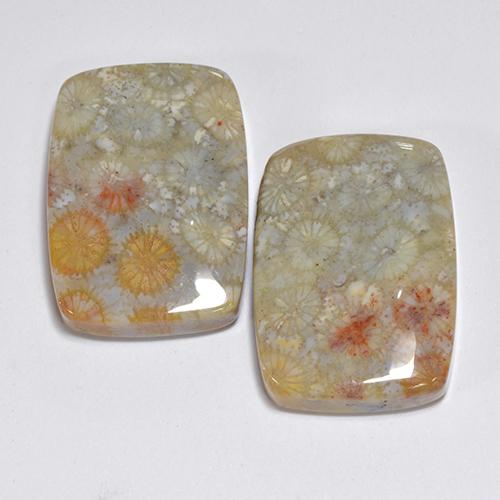 Multicolor Fossil Coral Gem - 16ct Cushion Cabochon (ID: 510931)