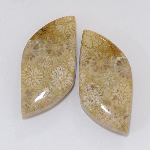 Multicolor Fossil Coral Gem - 10.2ct Fancy Cabochon (ID: 510936)