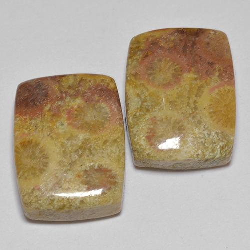 Multicolor Fossil Coral Gem - 8.3ct Cushion Cabochon (ID: 514175)