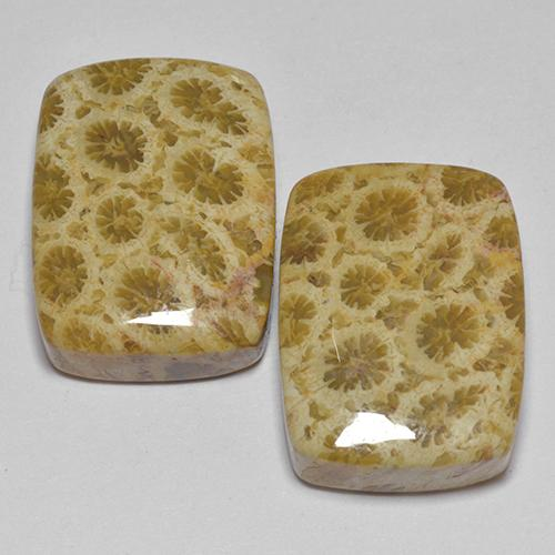 Multicolor Fossil Coral Gem - 13.6ct Cushion Cabochon (ID: 514176)