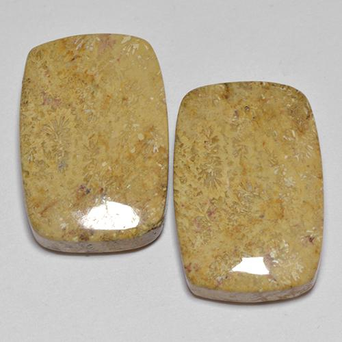 Multicolor Fossil Coral Gem - 14ct Cushion Cabochon (ID: 514180)
