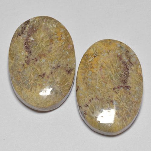 Multicolor Fossil Coral Gem - 8.8ct Oval Cabochon (ID: 514181)