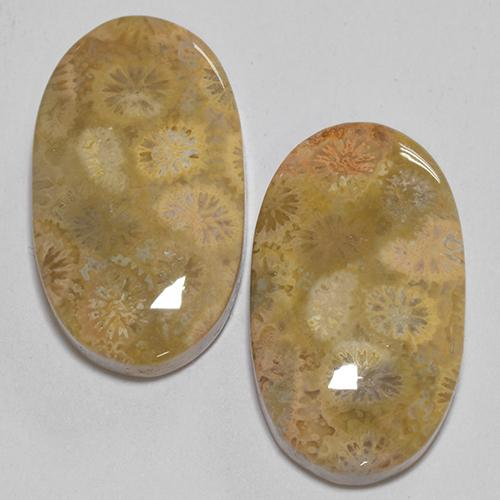 Multicolor Fossil Coral Gem - 12.4ct Oval Cabochon (ID: 514338)