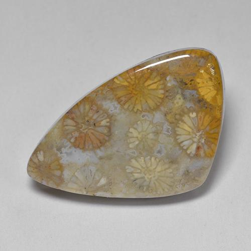 Multicolor Fossil Coral Gem - 11ct Fancy Cabochon (ID: 514530)