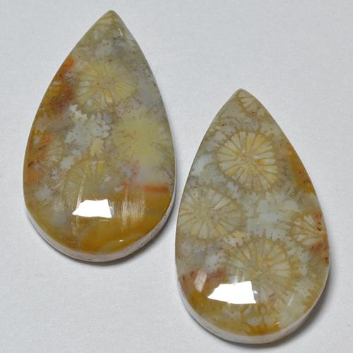 Multicolor Fossil Coral Gem - 8.1ct Pear Cabochon (ID: 514535)