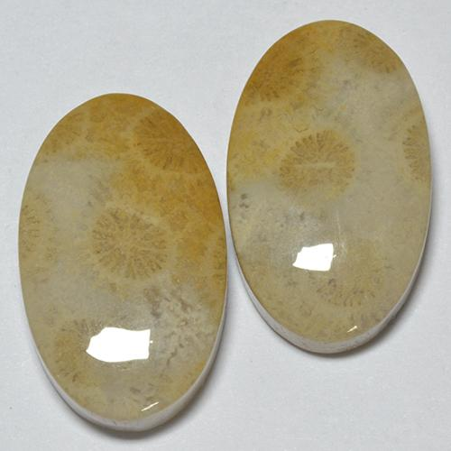 Multicolor Fossil Coral Gem - 14.6ct Oval Cabochon (ID: 514536)