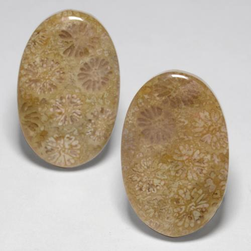 20.20 Carat Fossil Coral Cabochon Oval Shape Loose Gemstone Jewelry Making Oval Shape Healing Crystal