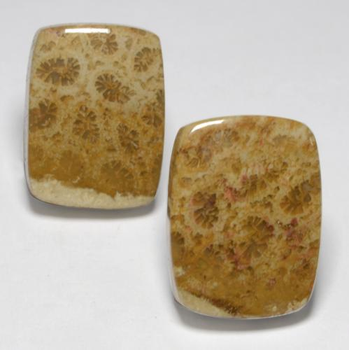 Multicolor Fossil Coral Gem - 10.7ct Cushion Cabochon (ID: 550358)