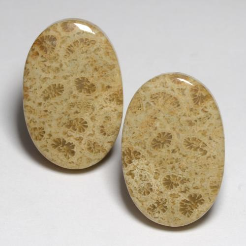 35x25x6 mm 1 Pcs Natural Fossil Coral Gemstone Rare Fossil Coral Cabochon Gemstone AAA Quality Oval Shape Amazing Designer Cabochon