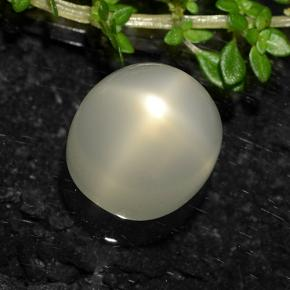 Cream Star Moonstone Gem - 8.5ct Oval Cabochon (ID: 490616)