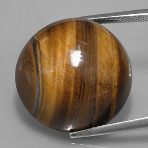 Gold Brown Tiger's Eye Gem - 36.5ct Round Cabochon (ID: 329086)