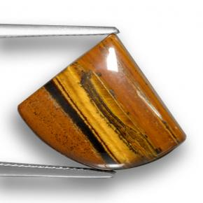Gold Brown Tiger's Eye Gem - 15.3ct Shark Fin Cabochon (ID: 461920)