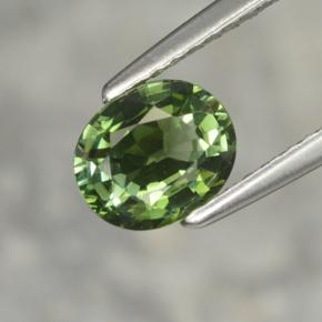 Buy 1.02ct Green Tourmaline 6.96mm x 5.78mm from GemSelect (Product ID: 255707)