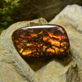 thumb image of 17.4ct Fancy Cabochon Multicolor Ammolite (ID: 295150)