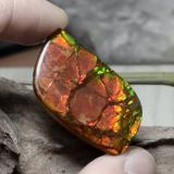 thumb image of 26.9ct Fancy Cabochon Multicolor Ammolite (ID: 377633)