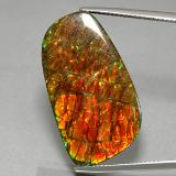 thumb image of 31ct Fancy Cabochon Multicolor Ammolite (ID: 377636)