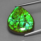 thumb image of 19.2ct Fancy Cabochon Multicolor Ammolite (ID: 452647)