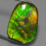 thumb image of 24.2ct Fancy Cabochon Multicolor Ammolite (ID: 452680)