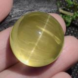 thumb image of 84.3ct Round Cabochon Golden Green Cat's Eye Apatite (ID: 469060)