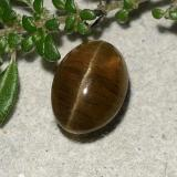thumb image of 2.6ct Oval Cabochon Dark Brown Cat's Eye Apatite (ID: 486007)